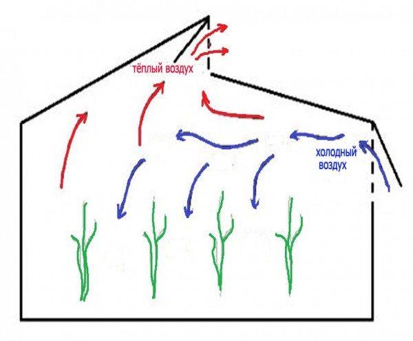 Направление воздушных потоков внутри Митлайдеровской теплицы