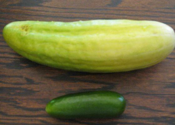 Обычно на воздухе, в обычных полевых условиях, огурцы получаются гораздо больше, зато теплицы могут помочь с этим овощем в совершенно неурочное для него время, например, в апреле