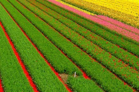 Ответ на вопрос, как правильно выращивать овощи в теплице, заключается в следовании простой истине поэта – «и кажется раз улицы чисты, чисты у нас слова и совесть». Другими словами, сначала нужно научиться всё делать с любовью, а затем уже ждать результата
