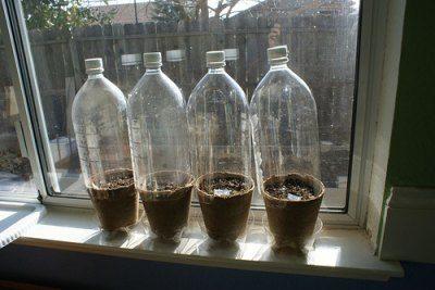Пластиковые бутылки идеальны для выращивания рассады