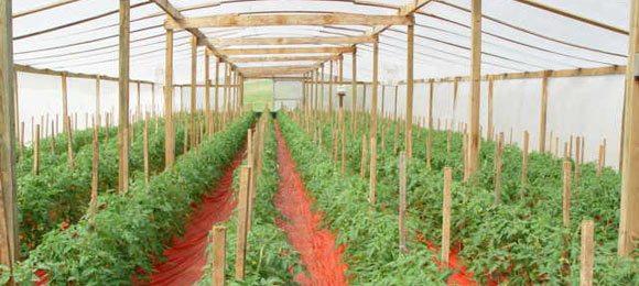 Подходящие для вашего климата сорта будут давать хороший урожай