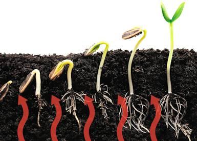 Подогреваемый грунт в теплице играет большую роль в росте растений и их дальнейшем развитии
