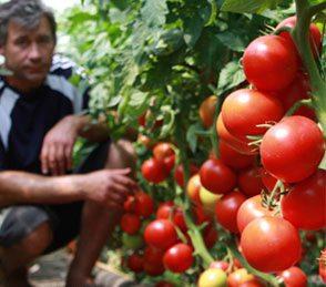 Правильная техника выращивания – продуктивный урожай!
