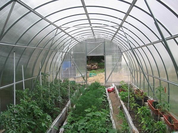 Правильное размещение посадок снижает вероятность затенения одних растений другими