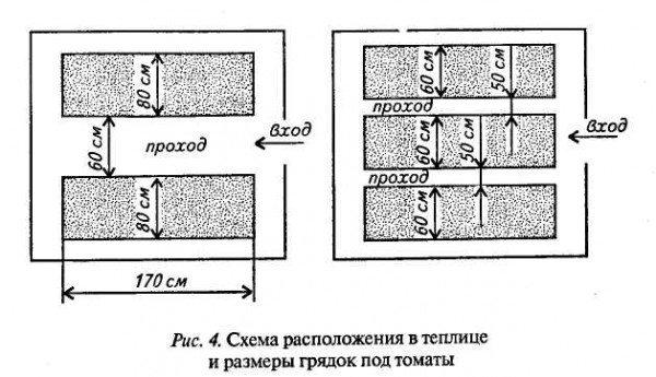 Примерная схема теплицы, в которой выращивают томаты