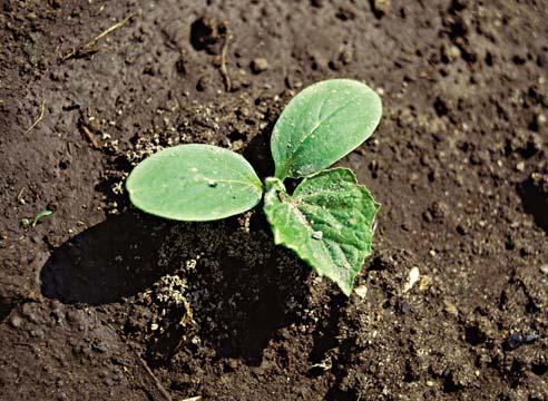 Прорастание семян занимает определенное время