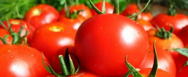 Раннеспелый сорт «Поиск F1» дает высокий урожай, устойчив к перепадам температур.