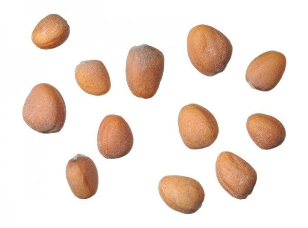 Семена корнеплодов