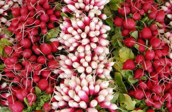 Шикарный урожай редиса