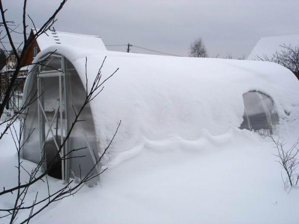 Снег и холод нипочём