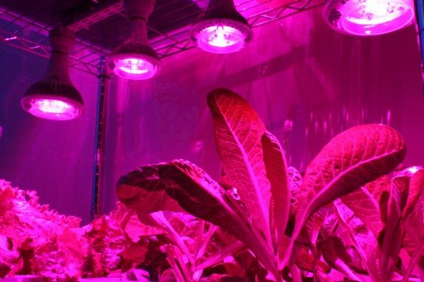 Специальные лампы, создающие ультрафиолетовое излучение