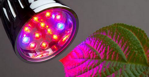 Светодиодная лампа обеспечивает необходимый спектр освещения