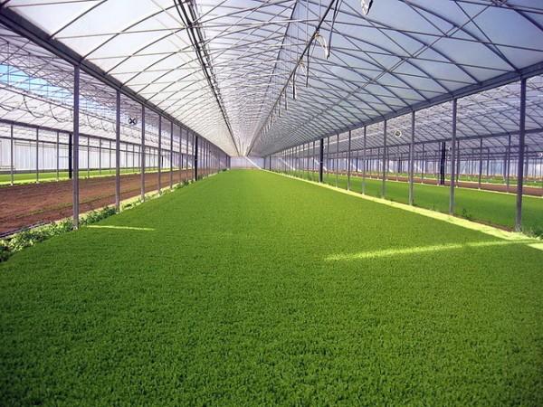 Такие большие сооружения необходимы для промышленного выращивания растений.