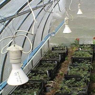 Температура в парниковых конструкциях поддерживается благодаря использованию инфракрасных ламп.