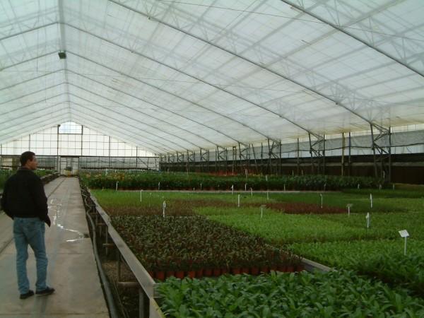 Тепличный бизнес на зелени способен за один сезон принести миллионные прибыли