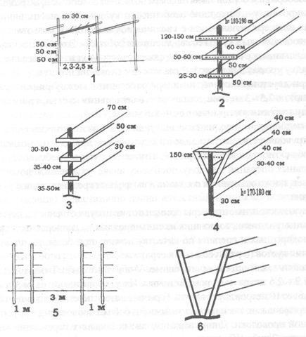 Типы шпалера: 1 – наклонное перекрытие; 2 –широкая с двумя плоскостями; 3 – узкая с двумя плоскостями; 4 – двухплоскостная с укосами из дерева; 5 – вертикальная с двумя строками; 6 – наклонная с двумя плоскостями.