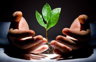 Урожайность тепличных растений напрямую зависит от качества и количество света