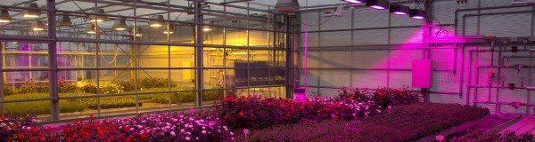Установка дополнительного освещения может значительно увеличить урожайность и качество готовой продукции