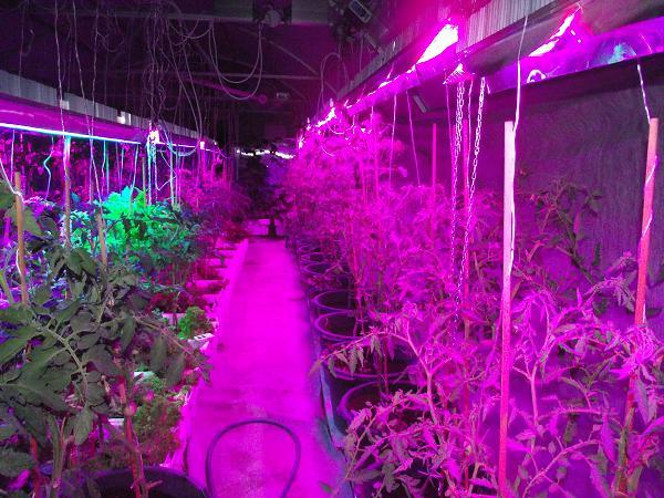 В капитальных сооружениях не грех потратиться на освещение, благоприятное для растений – красного спектра