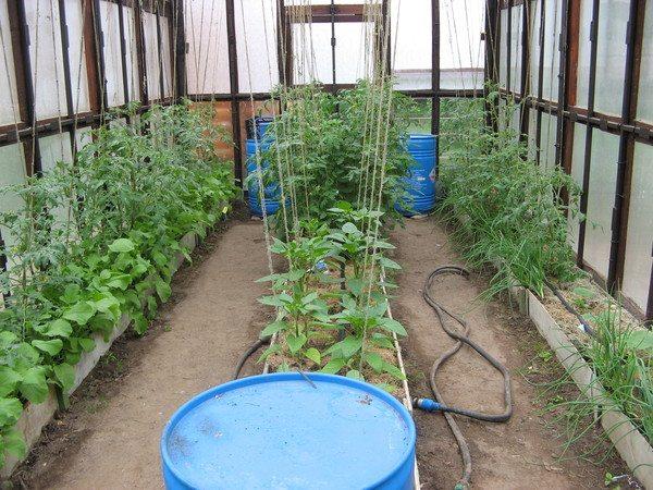 Высокорослые растения не должны затенять низкорослые