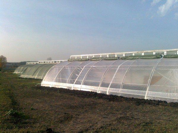 Заглубленная теплица с цилиндрической крышей