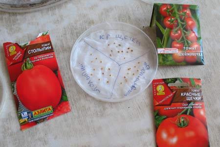Замачивая семена, нужно подписать сорт