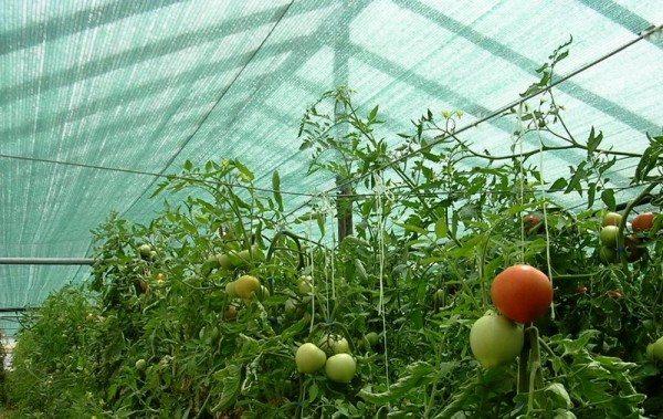 Защищённый урожай