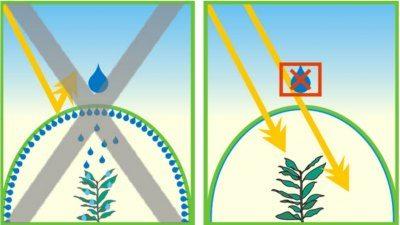 Защита растений от холодной «капели» очень важна