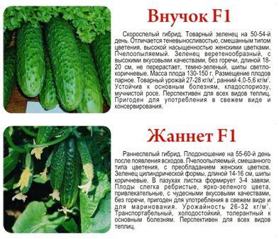 Богатый урожай зависит от правильного выбора семян.