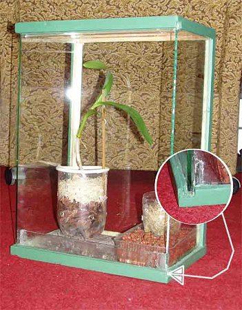 Фото маленькой теплицы для комнатного растения