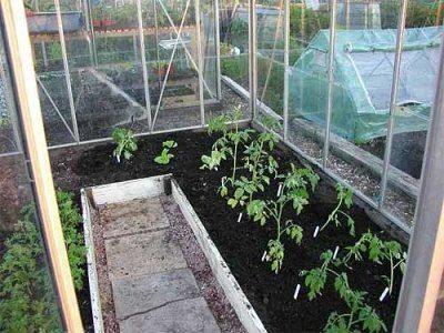 Молодые растения в стеклянной теплице
