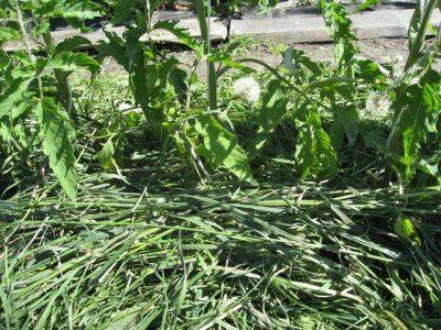 Мульчирование почвы позволит надолго сохранять в ней влагу