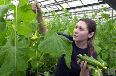 Поддержание оптимального микроклимата – залог отличного урожая