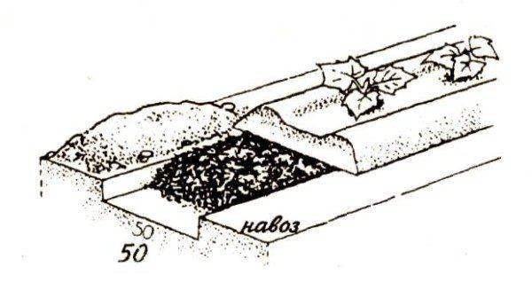 Подготовка теплицы к посадке огурцов начинается в организации грядок
