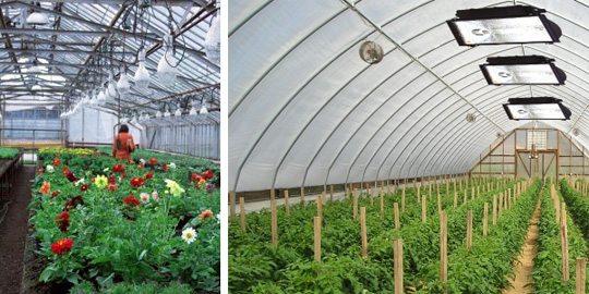 Подобные секреты выращивания помидоров в теплице позволят добиться прекрасного урожая.