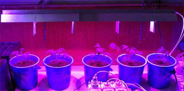 Подсветка рассады томатов