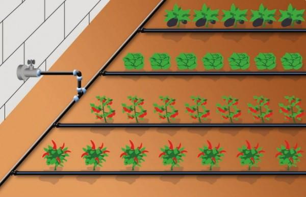 Полив теплицы – главное из условий высокого качества выращиваемых садовых культур и большого урожая