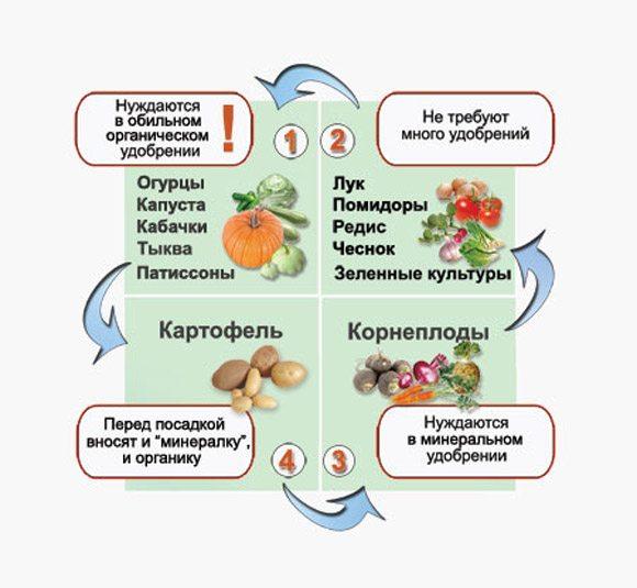 Последовательность посадки овощей.