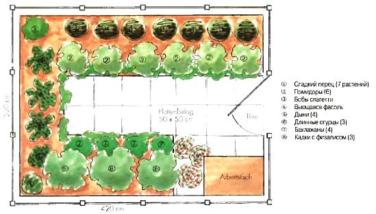 Пример расположения рядов с различными растениями в отношении сторон света.