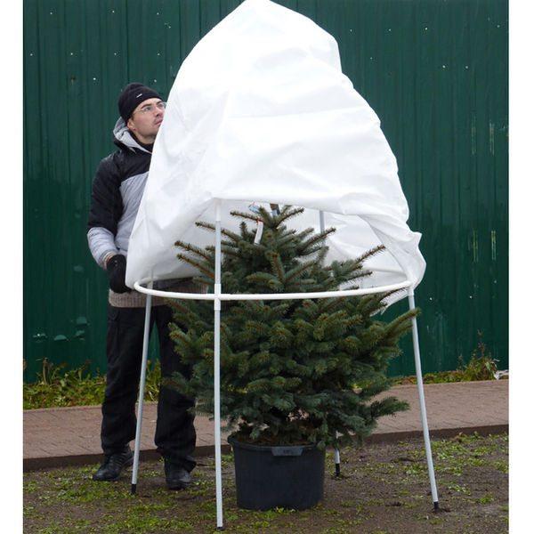 Теперь деревцу не страшен мороз и ветер