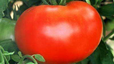 Цена томатов зависит от их внешнего вида