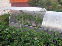 Удобное проветривание – еще один плюс теплиц из поликарбоната и оцинкованных труб