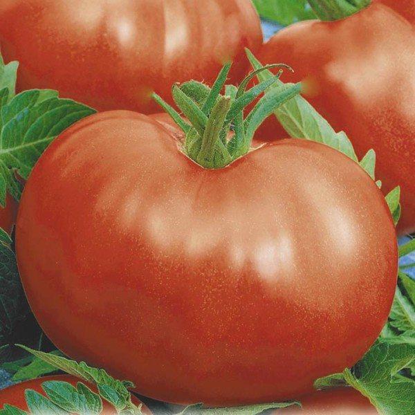 В среднем размер плода Сибиряк – 1,5 кг.