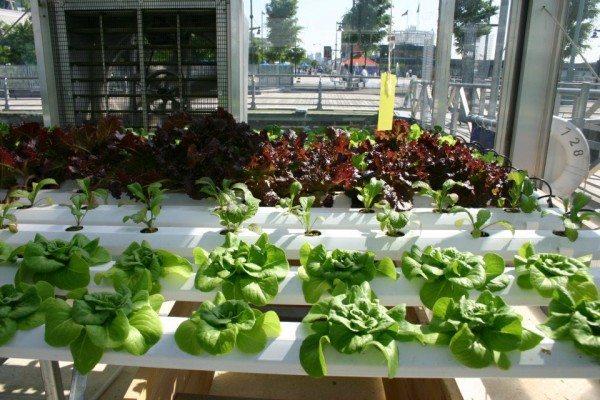 Гидропоника - это новая технология для выращивания растений