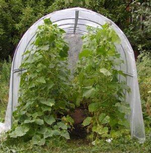 Конструкция для шпалерного выращивания