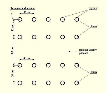 На фото изображена традиционная схема посадки томатов.