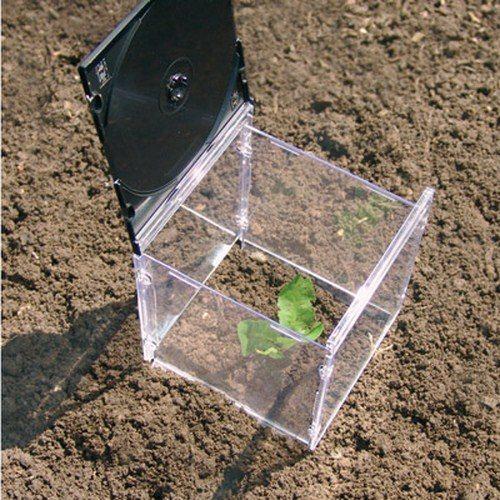 Оригинальное решение, которое может подойти для одного или двух растений