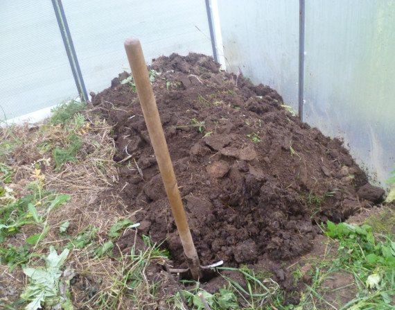 Осенью землю в теплице перекапывают, очищая от личинок и растительных остатков.