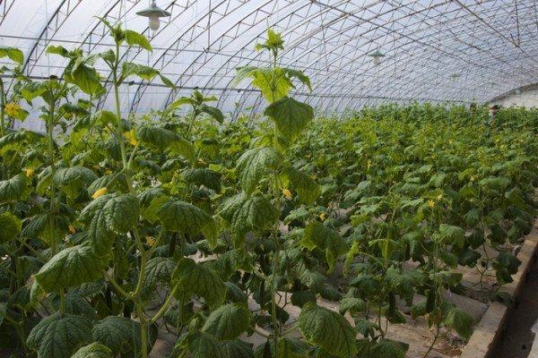 Овощи – основной источник прибыли