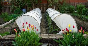 Подходящий вариант для выращивания цветов